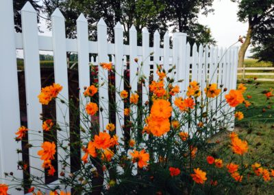 Life Beyond the Picket Fence